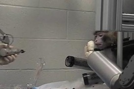 Monkey brain controls robotic arm